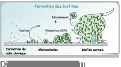 img_droite_eau_resultats_bacteries_2